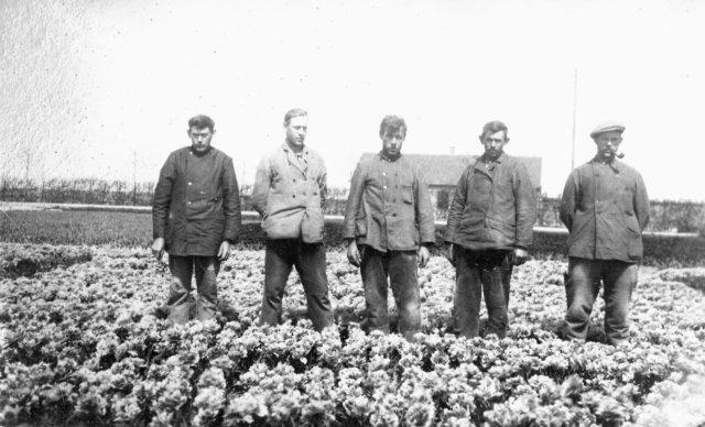 Westfriese Historische Reeks | Deel 1: Bloembollen