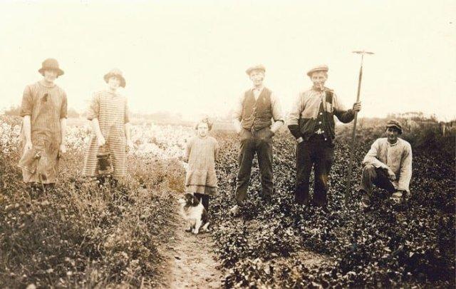 Westfriese Historische Reeks, deel 3: Tuinbouw en zaadteelt-802